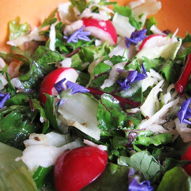Salade croquante aux feuilles de betteraves rouges, radis, chou-rave et fleurs de violettes