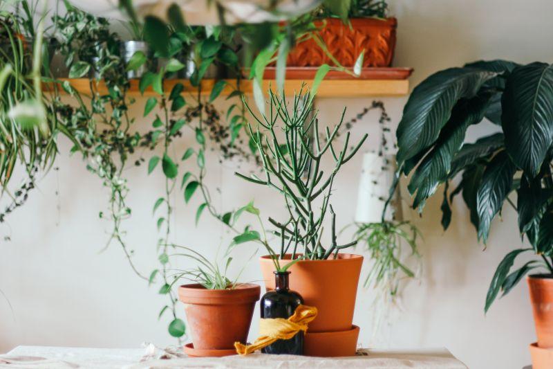 Stress, anxiété, surmenage... les plantes amies !